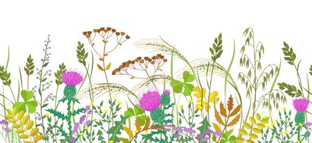 Seamless horizontal border with autumn meadow plants and wild flowers. Floral pattern with fading grass, colorful wild flowers, thistle  in row on white background.  Vettoriali