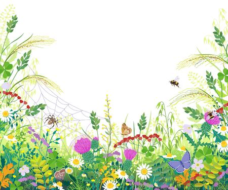 Horizontal border with summer meadow plants. Green grass, colorful flowers, butterfly, bumblebee, spider on web on white background, space for text. Floral natural backdrop vector flat illustration.