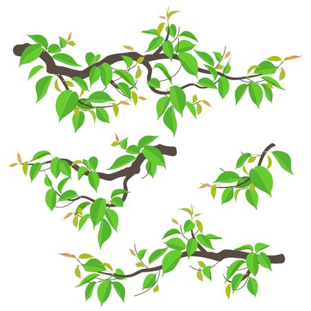 Set of simple tree branches with young green leaves isolated on white. Colorful fresh foliage in spring or summer season. Part of deciduous plant vector illustration in flat style.