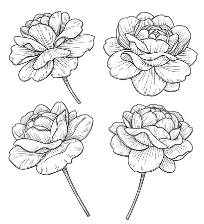 Hand drawn set of big rose flower heads isolated on white background. Monochrome floral elements, plant parts vector sketch in vintage style.