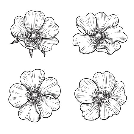 Hand drawn dog-rose flowers isolated on white background. Monochrome floral set in vintage style.