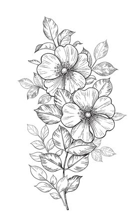 Hand drawn dog-rose branch with flowers and leaves isolated on white. Vector line art monochrome elegant floral composition in vintage style, tattoo design, coloring page, wedding decoration.