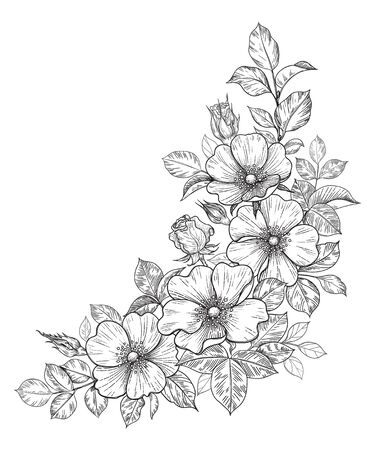 Hand drawn dog-rose bunch with flowers and leaves isolated on white. Vector line art monochrome elegant floral corner composition in vintage style, tattoo design, coloring page, wedding decoration. Illustration