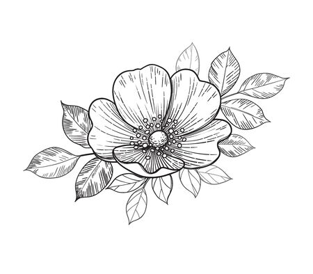 Hand drawn dog-rose flower and leaves isolated on white. Vector line art monochrome elegant floral composition in vintage style, tattoo design, coloring page.