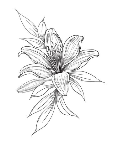 Hand drawn lily flower, bud and leaves isolated on white. Vector monochrome elegant floral composition in vintage style, tattoo design, coloring page, wedding decoration. Vektorgrafik