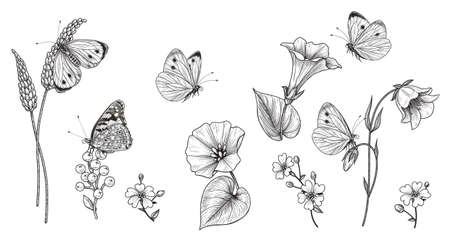 Hand drawn wildflowers and butterflies isolated on blank background. Black and white different floral elements and meadow insects. Vector monochrome elegant flowers set in vintage style.