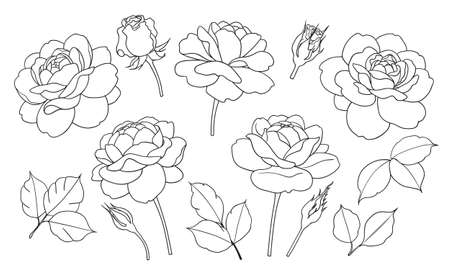 Contoured simple rose flowers, buds and leaves isolated on white background. Floral set template for laser cutting, tattoo design, stamping, coloring page. Monochrome vector illustration. Vettoriali