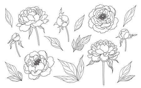 Contoured simple peony flowers, buds and leaves isolated on white background. Floral set template for laser cutting, tattoo design, stamping, coloring page. Monochrome vector illustration.