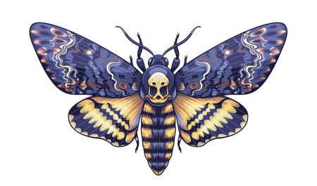 Hand drawn Acherontia Styx butterfly isolated on white background. Vector Death's-Head Hawk Moth top view. Colored Illustration in vintage style, t-shirt design, tattoo art. Vetores