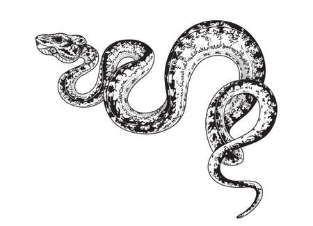Hand drawn creeping Garden Tree Boa isolated on white background. Vector monochrome winding spotted snake, side view. Animalistic illustrations in vintage style, t-shirt design, tattoo art.