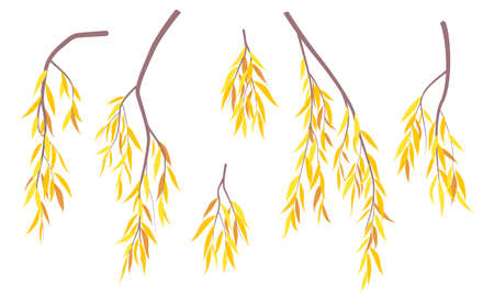 Set of simple autumn tree branches with yellow leaves isolated on white. Colorful foliage weeping willow tree in fall season. Part of deciduous plant vector illustration in flat style. Illustration