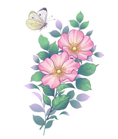Hand drawn dog-rose branch with pink flowers and flying butterfly isolated on white. Vector elegant floral composition in vintage style, tattoo design, wedding decoration.