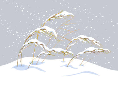 Winter snow covered meadow plants. Wild cereals under the snow on gray background. Winter scenery fragment with simple dried grasses in snowfall vector flat illustration.