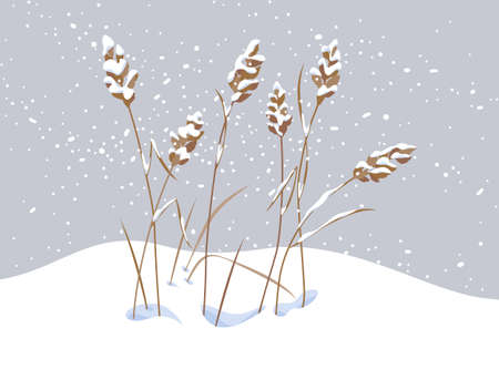 Winter snow covered meadow plants. Wild cereals under the snow on gray background. Winter scenery fragment with simple dried grass in snowfall vector flat illustration.