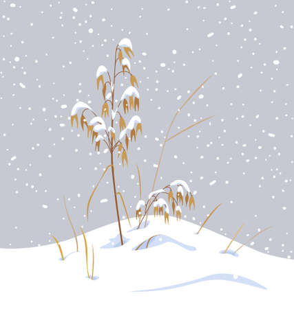 Winter snow covered meadow plants. Wild cereals under the snow on gray background. Winter scenery fragment with simple dried oat in snowfall vector flat illustration. Stock Illustratie