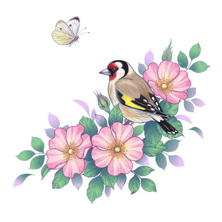 Hand drawn goldfinch sitting on Dog-Rose branch with pink flowers and flying butterfly. Vector elegant floral arrangement with bird in vintage style, t-shirt, tattoo design.