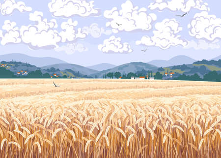 Nature scene with field of ripe wheat, hills, floating clouds and flying birds in sky. Calm summer countryside landscape vector illustration. Simple natural horizontal background. Stock Illustratie
