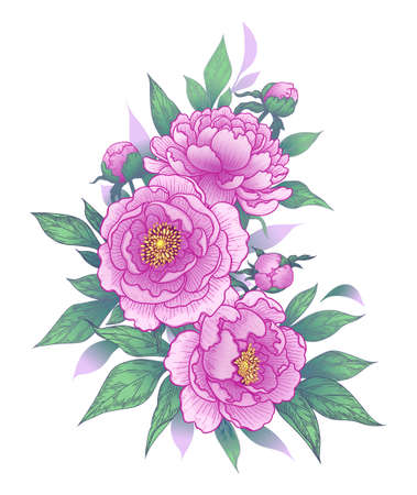 Hand drawn pink peony flowers, buds and leaves bunch isolated on white. Vector line art elegant floral arrangement in vintage style, t-shirt, tattoo design, wedding decoration. Stock Illustratie