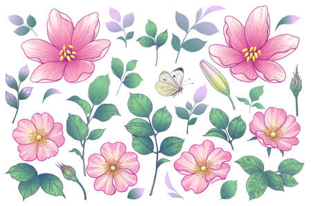 Blooming different flowers heads, buds and leaves isolated on white background. Summer collection with pink dog-roses. Vector floral elements and flying butterfly in vintage style. Stock Illustratie