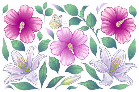 Blooming Hibiscus and Lily heads, buds and leaves isolated on white background. Summer collection with pink and white flowers. Vector floral elements and flying butterfly in vintage style. Stock Illustratie