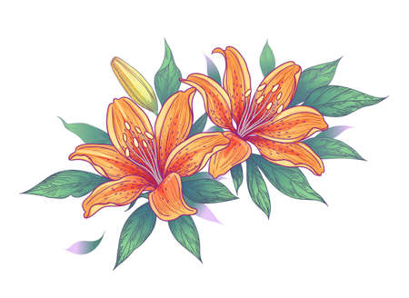 Hand drawn bunch with orange lily flowers, bud and leaves isolated on white. Vector elegant floral composition with Tiger lilies in vintage style.