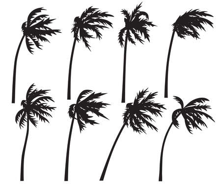 Set of palm trees in wind storm isolated on white background. Black silhouettes of trees in wind. Tropical landscape element design. Monochrome simple plants vector flat illustration. Stock Illustratie