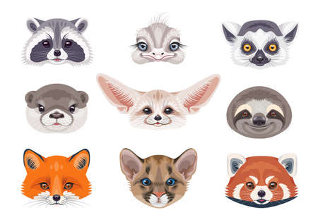 Funny animal faces or heads isolated on white background. Wild animals set. Cartoon cute cougar cub, sloth, red fox, fennec, lemur, red panda, otter, ostrich and raccoon vector flat illustration.