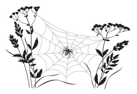 Black big spider sitting on web between two plant stems. Silhouette of spiderweb on plants isolated on white background. Monochrome vector illustration with cobweb and wildflower. Stock Illustratie