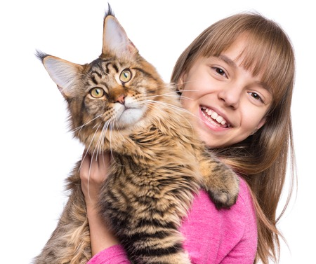 kitty cat: Happy little girl hugging lovely kitten. Cute ten year old child playing with her cat, isolated on white background. Portrait of beautiful kid holding on hands big fluffy Maine Coon kitty. Stock Photo