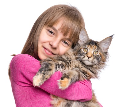 maine coon: Little girl with Maine Coon kitten