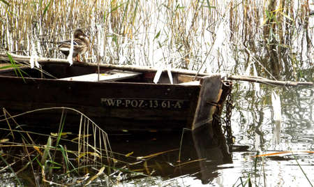a photo showing an old wooden boat abandoned on the shore of a lake in the rushes