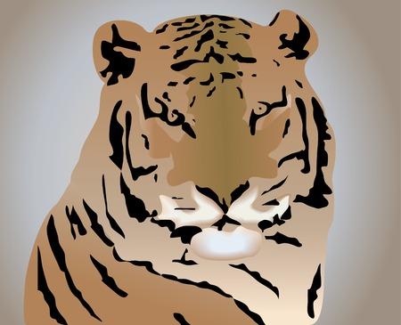 Tiger Stock Vector - 5654037