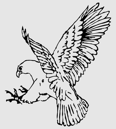 zopilote: Silueta de Eagle.Black en blanco. Vectores