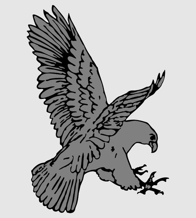 Vector illustration of eagle Stock Illustration - 8209696