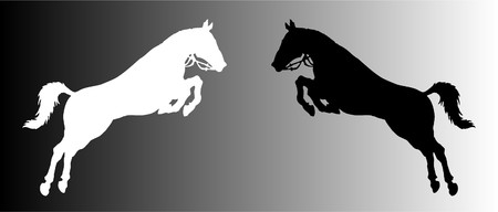 vector silhouette of two horses photo