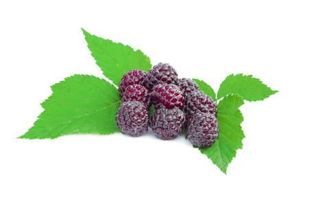 royalty free: blackberries fruit  with green leaves on a white background