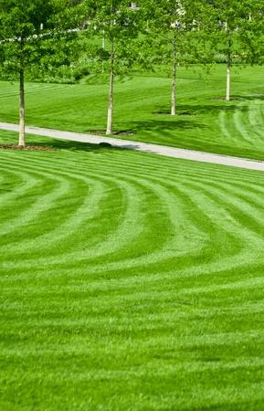 garden lawn: huge green lawn