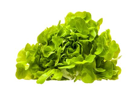 Fresh lettuce leaves isolated on a white background. The concept of diet, vegetarian and healthy eating. Close-up.
