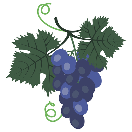 Vector clipart Bunch of Blue Grape. A hand-drawn image for insertion into a document, a website, a presentation, etc.