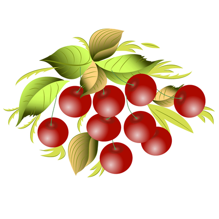 Vector clipart Cherry. A hand-drawn image for insertion into a document, a website, a presentation, etc.