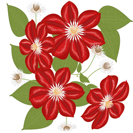 Vector clipart Flower Clematis. A hand-drawn image for insertion into a document, a website, a presentation, etc.