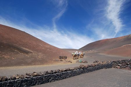 A tourist camel track up the side of a volcano. Shot in Lanzarote
