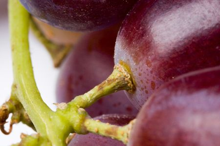 Extreme closeup of black grapes