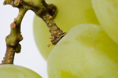 Closeup of some white grapes Stock Photo