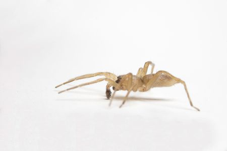 arachnophobia animal bite: A small spider crawling slowly along looking for prey
