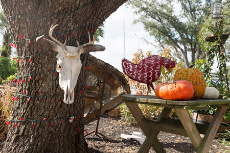 christamas: Cow skull hanging on a tree with red Christamas lights next to a table with pumkins and chicken outdoor display