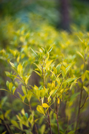 texas tea: Soft light green leaves background with swirl bokeh and blur