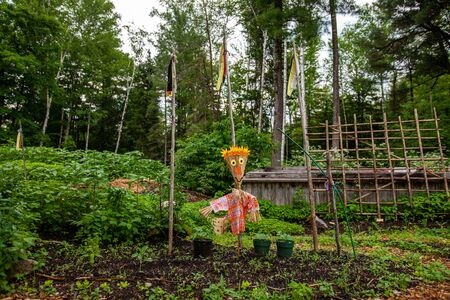 Diverse people enjoy spiritual gathering A fun scarecrow is seen protecting a vegetable plot at an outdoor site where people gather to experience healthy exercise and mindfulness.