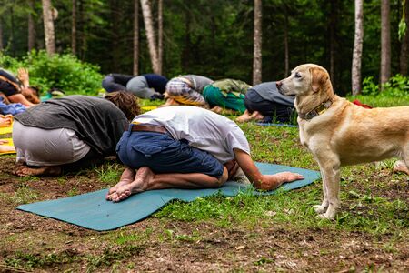 Diverse people enjoy spiritual gathering A beautiful golden labrador dog is seen standing from the side in woodland as a diverse group of people seek enlightenment through mindful meditation.