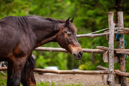 Diverse people enjoy spiritual gathering A closeup and side profile view of a large chestnut horse standing in a pen with traditional ranch style fence made from tree branches in rural woodland. Stock Photo